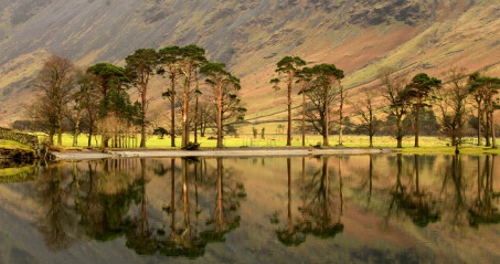 Buttermere Pines