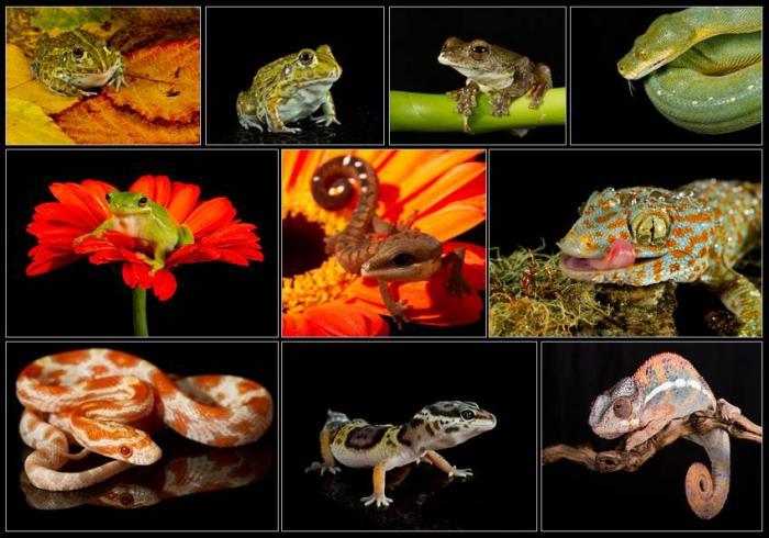Reptile Zone Panel