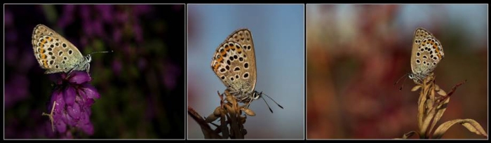 Silver Studded Blue Panel