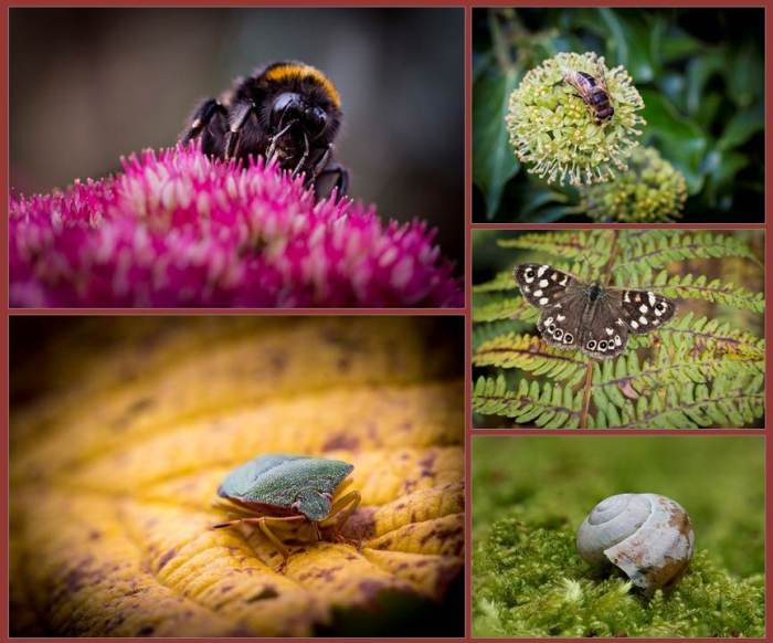 Bugs & Butterflies Panel