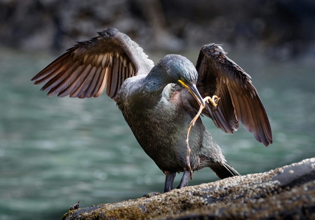 Shag with Nesting Material