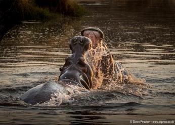 Hippo Dispute