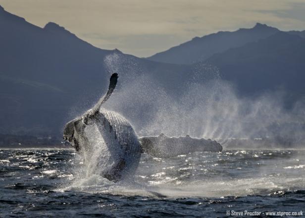 7D2_20249 - Humpback Whale