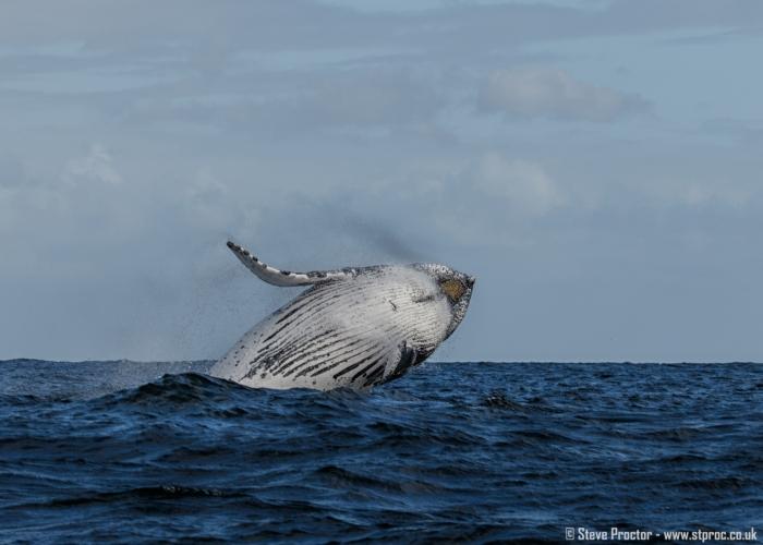 7D2_20293 - Humpback Whale
