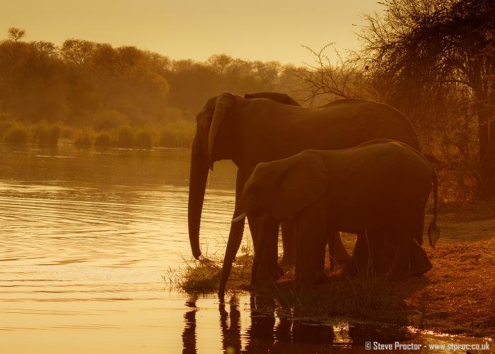 Elephants Drinking at Sunrise